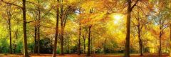 Leinwandbäume 50x150cm - Farbe