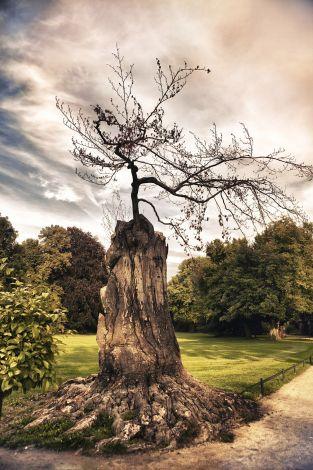 Leinwand Alter Baum 78x118cm